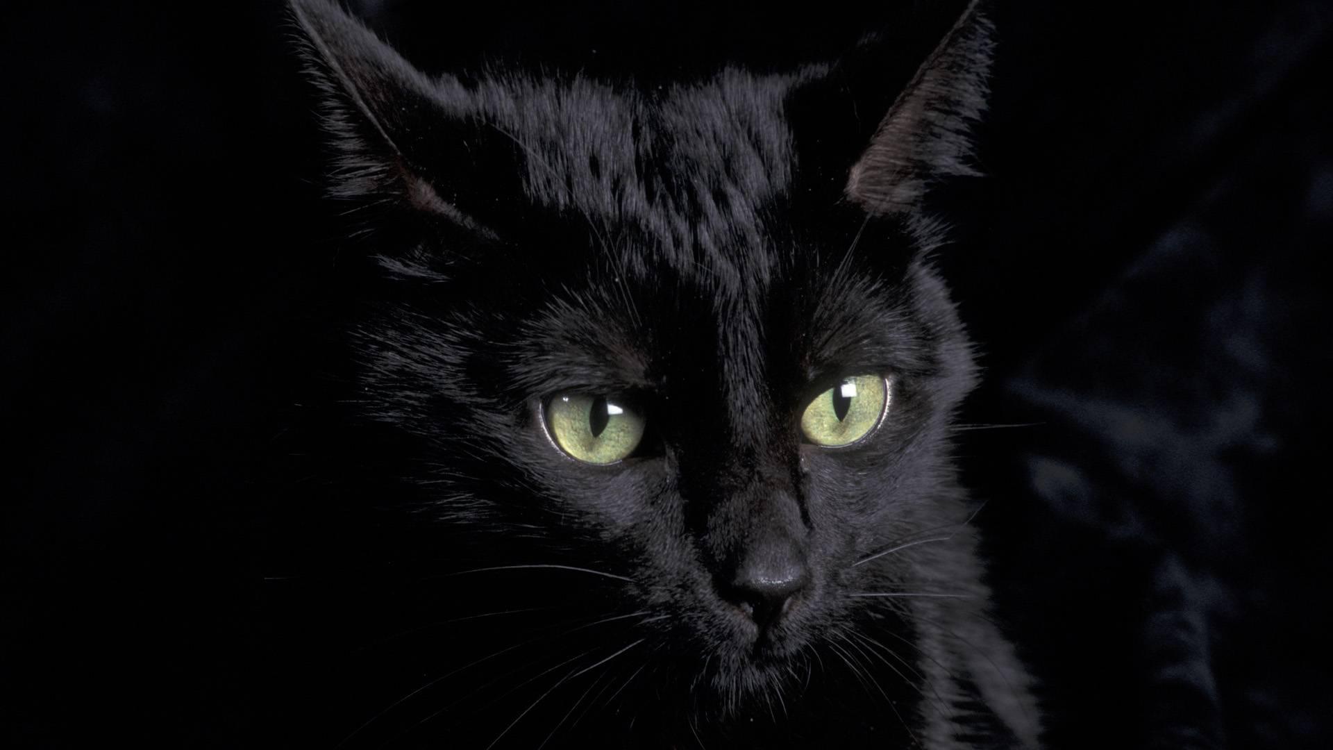обои на рабочий стол черная кошка с зелеными глазами № 174181  скачать