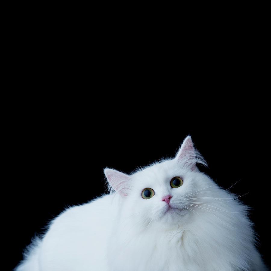siberian-mouse-foto