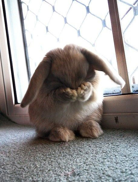 Funny rabbit face