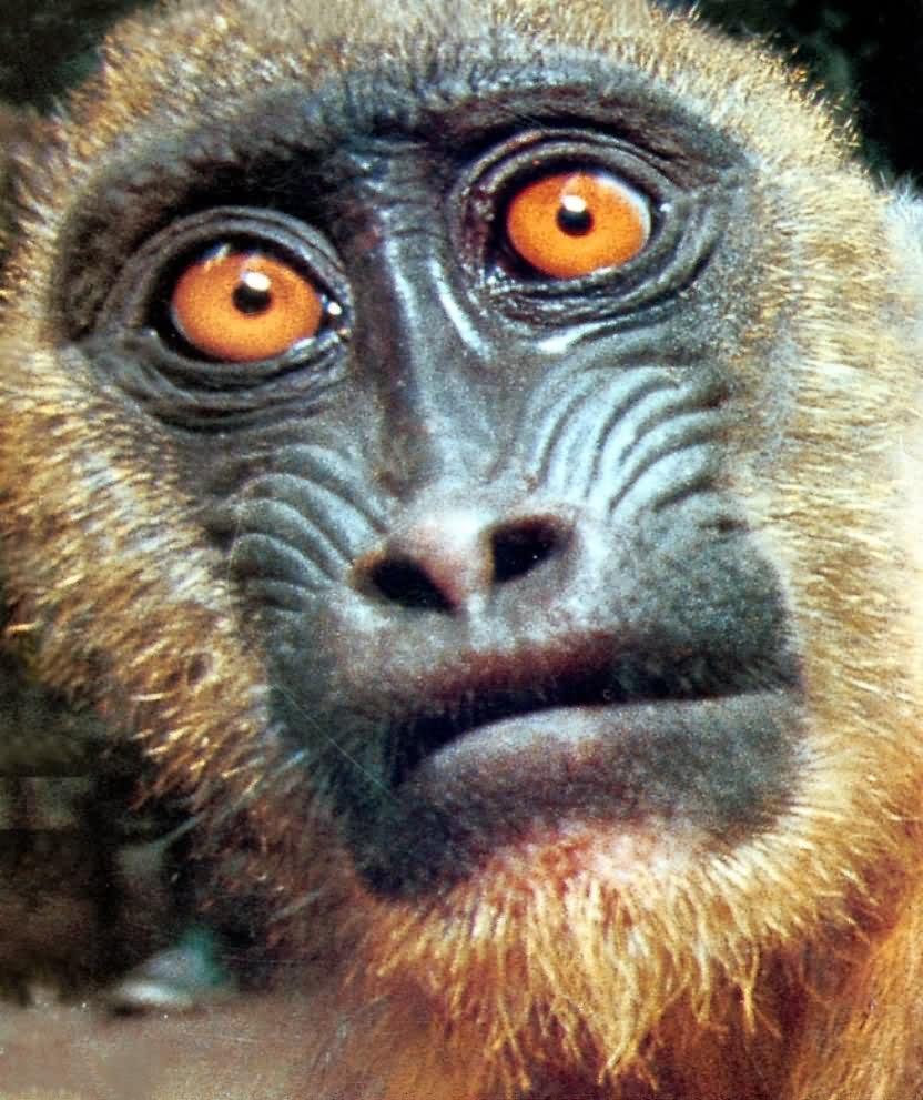 Monkey funny face