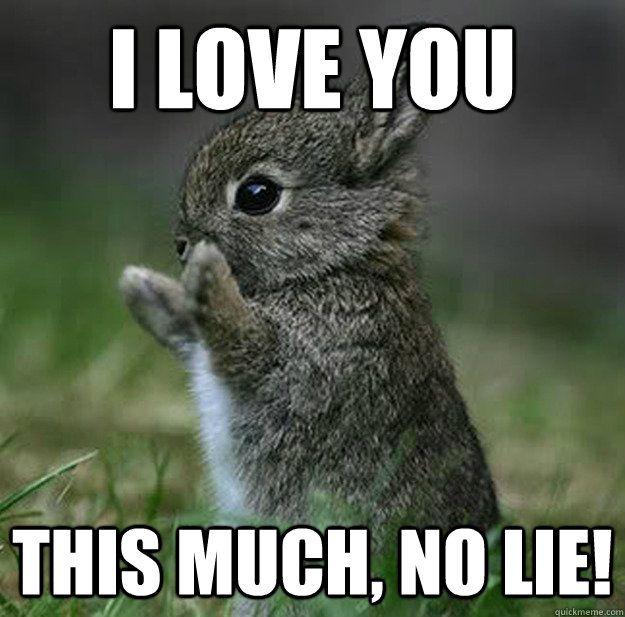 Cute animal love memes