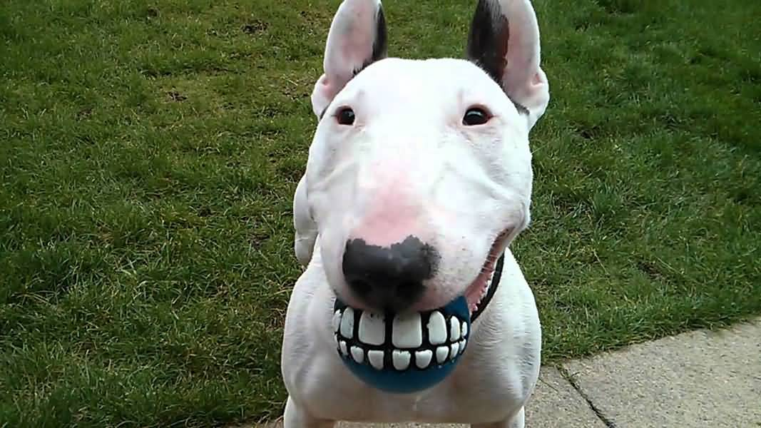 11 Smiling Dogs That Are Here to Help Brighten Your Day photo