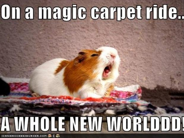 Funniest Animal Memes In The World : A whole new world funny animal meme