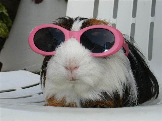 Cool Picture Of Dog In Sun Glasses Funny Animal