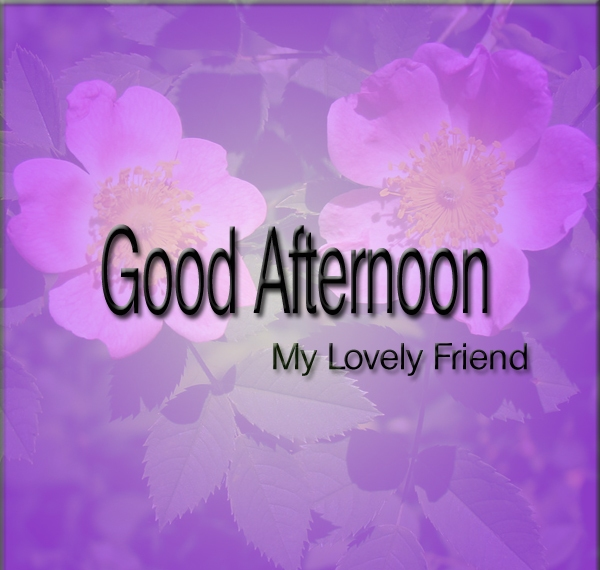 Good Afternoon Picture Quotes: 16 Best Good Afternoon Images For Friends