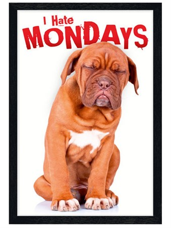 I Hate Mondays Sad Dog Photo