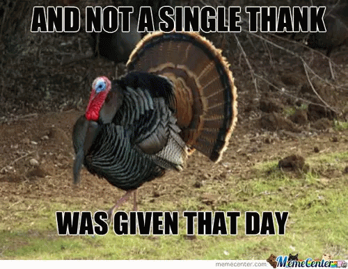 Funny Meme For Thanks : And not a single thank was given that day funny thanksgiving meme