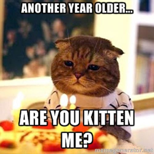 Another Year Older Are You Kitten Me Funny Birthday Meme another year older are you kitten me funny birthday meme