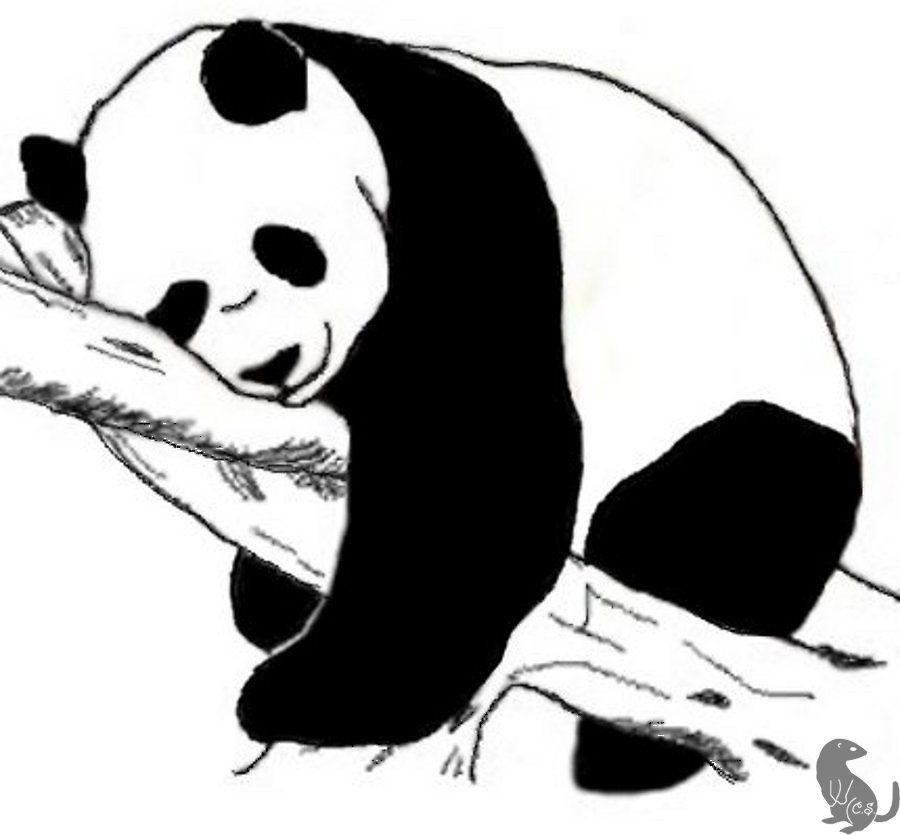 4 Panda Tattoo Design Ideas