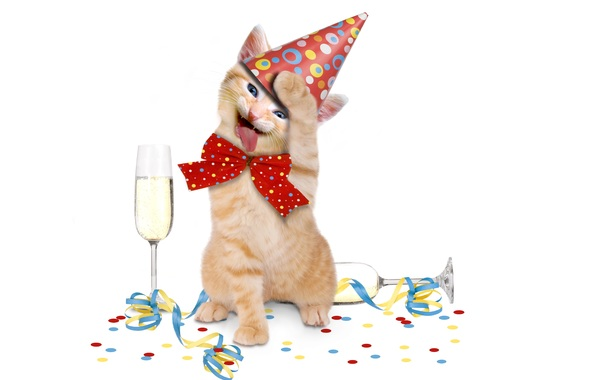cat dancing on his birthday funny animal