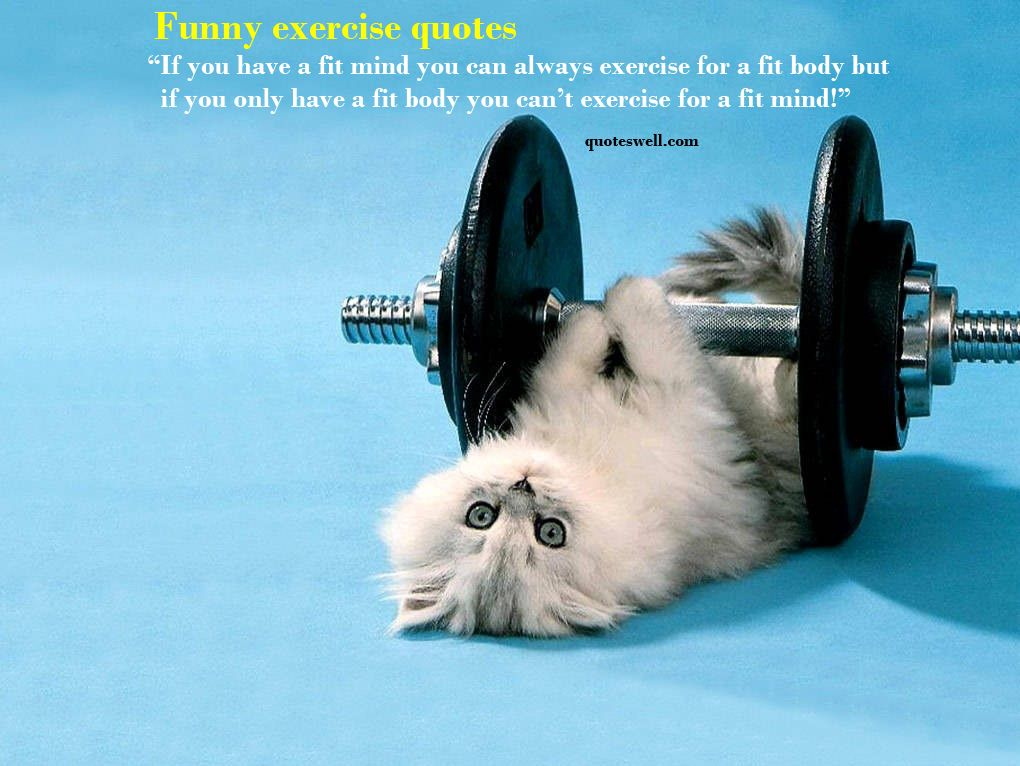 Cat Doing Exercise Funny Picture