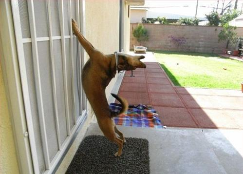 Dog Doing Exercise Funny Picture