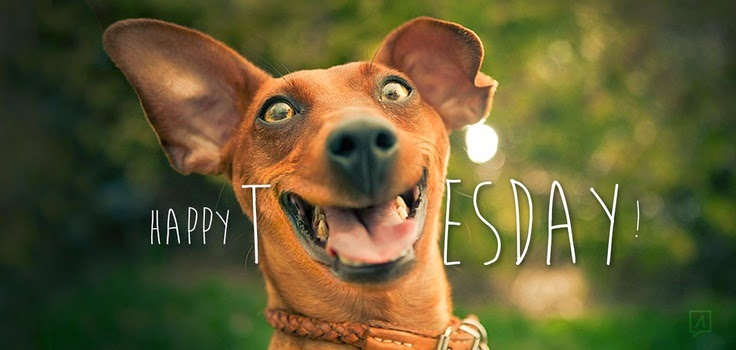 https://www.askideas.com/media/06/Happy-Tuesday-Funny-Smiling-Dog-Picture.jpg
