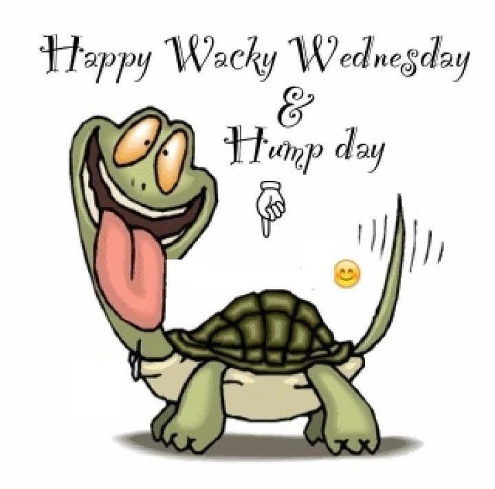 Happy Wacky Wednesday Hump Day Funny Laughing Tortoise Picture
