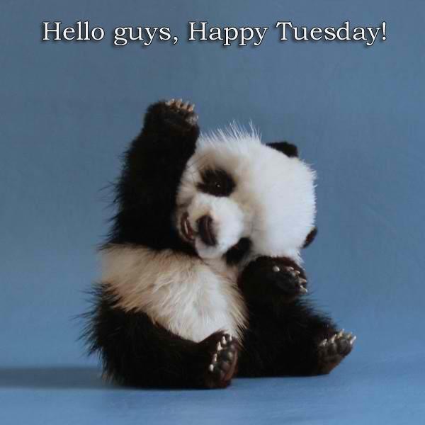 Hello Guys Happy Tuesday Panda Picture