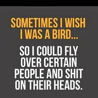Attrayant Sometimes I Wish I Was A Bird Funny Life Quote