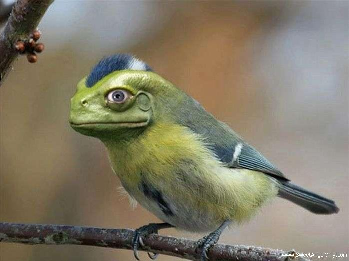 Bird With Frog Face Funny Picture