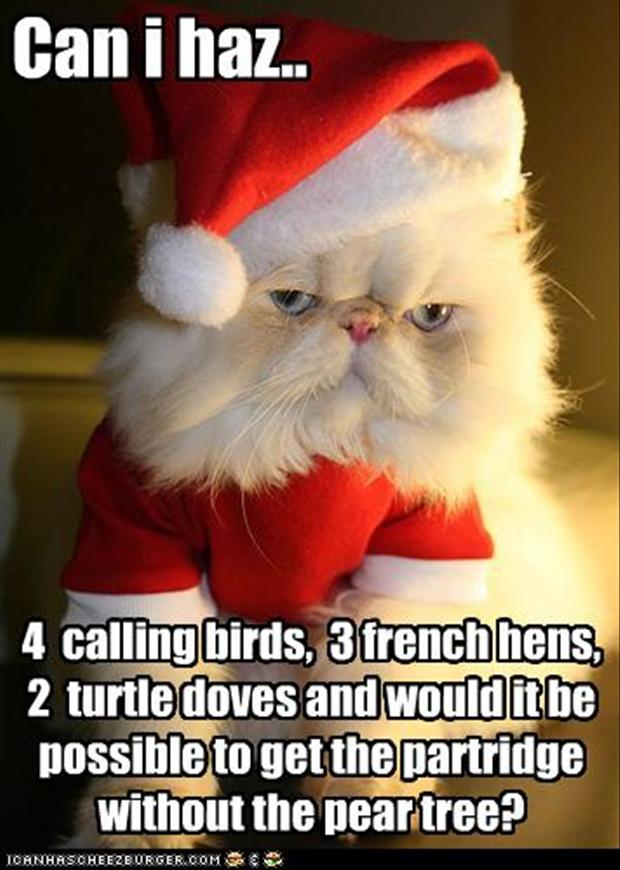 Can I Has Funny Cat Christmas Meme