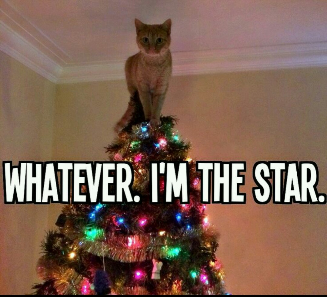 Funny Christmas Tree Pictures