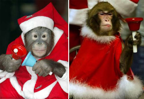 Christmas Celebration For Animal Funny Picture