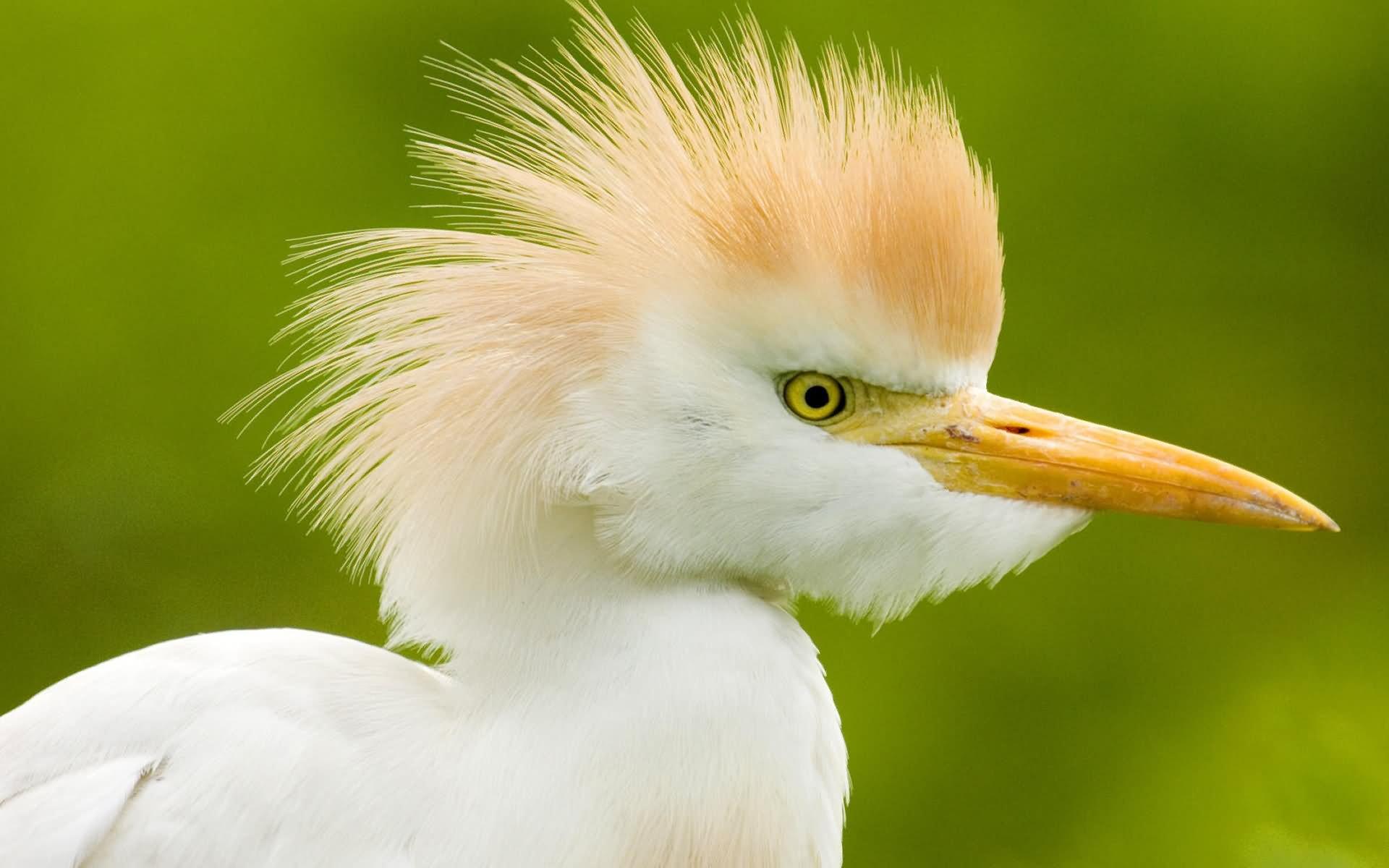 21 best funny birds pictures - Funny bird pics ...