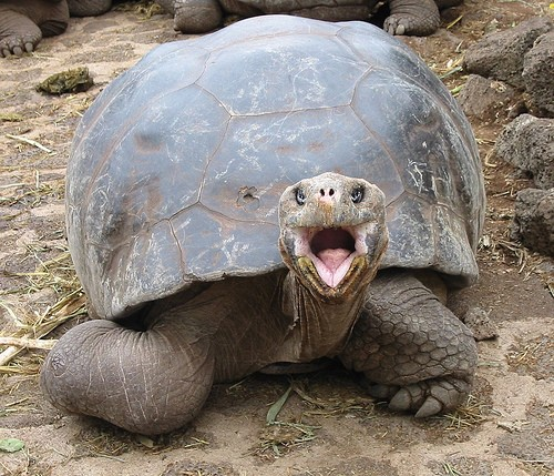 25 most funny tortoise pictures