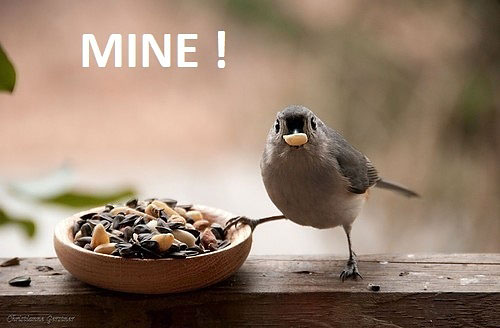 21 Best Funny Birds Pictures