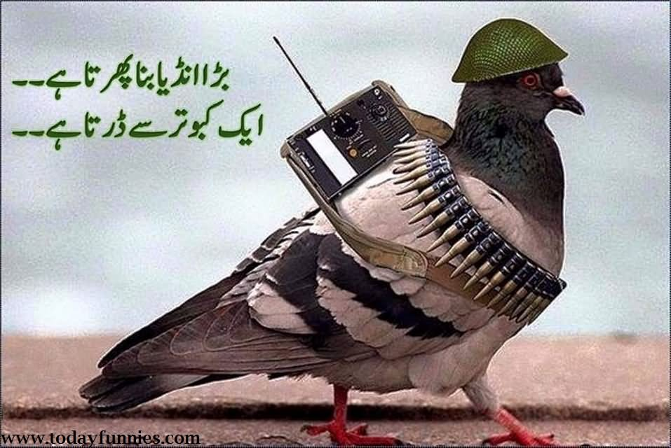 War Related Bird Claw Quote: 10 Most Funny Army Images