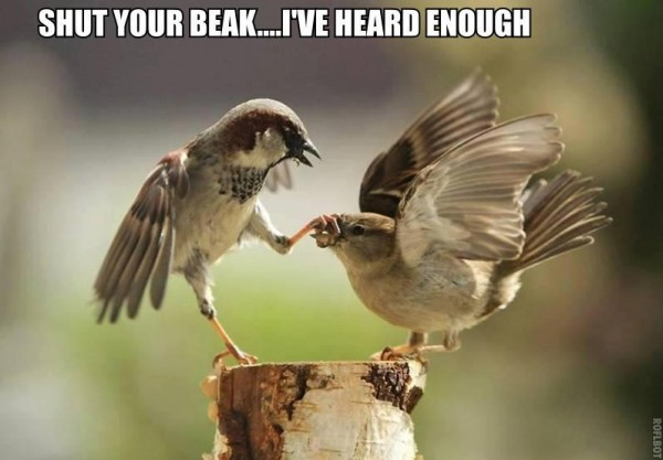 30 Most Funny Bird Meme Pictures Of All The Time