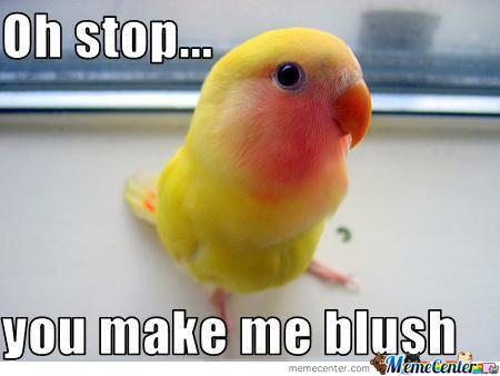 You Make Me Blush Funny Bird Meme you make me blush funny bird meme