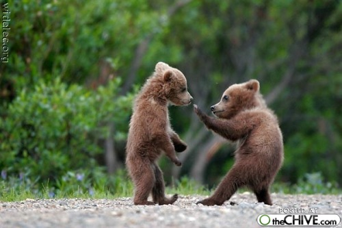 Animals Funny Fighting Nature Picture