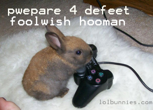 Bunny Playing Game Funny Picture With A Pancake On Its Head