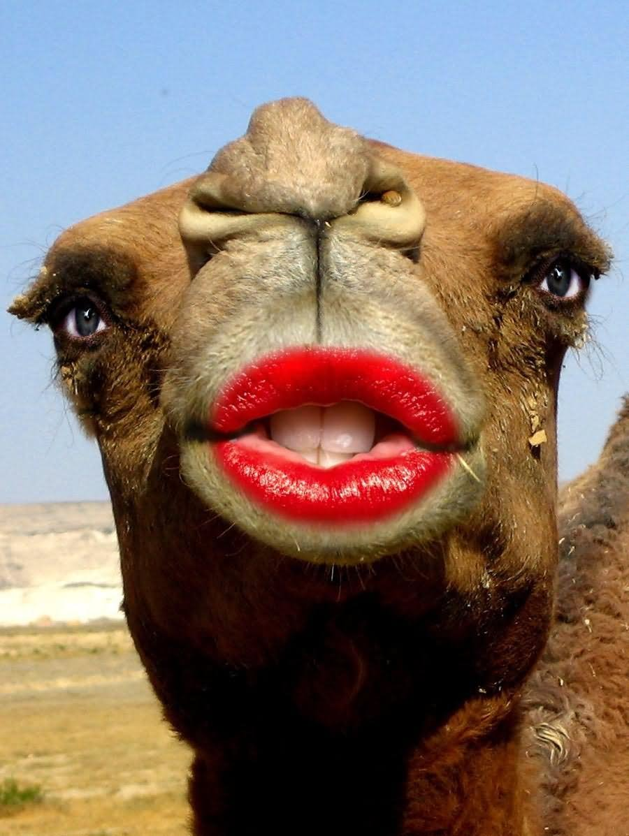 Camel With Woman Lips Funny Picture