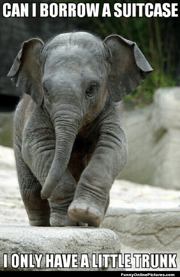 Can I Borrow A Suitcase Funny Elephant Meme elephant running with shoes funny gif