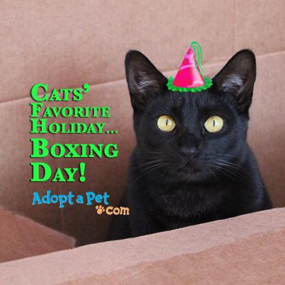 Cats Favorite Holiday Boxing Day Black Cat Picture