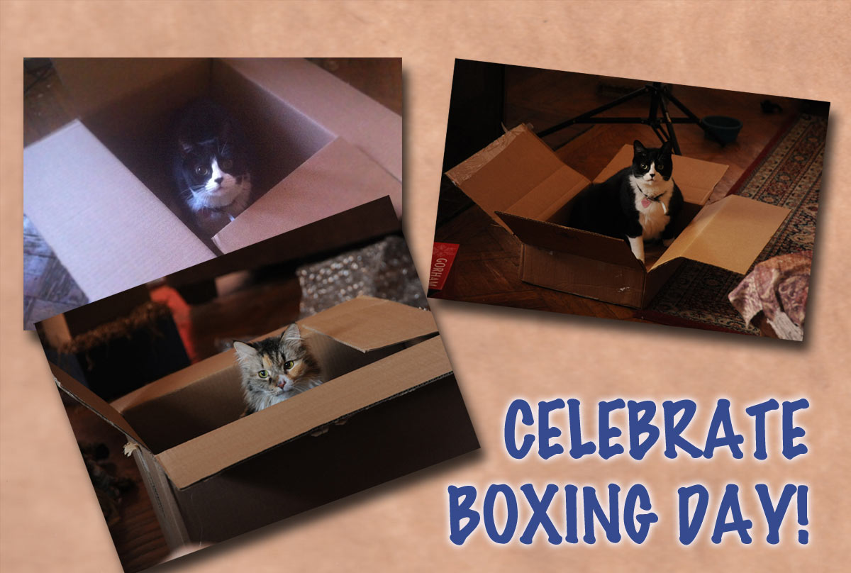 Celebrate Boxing Day Cats Picture