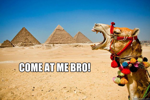 Come At Me Bro Funny Camel