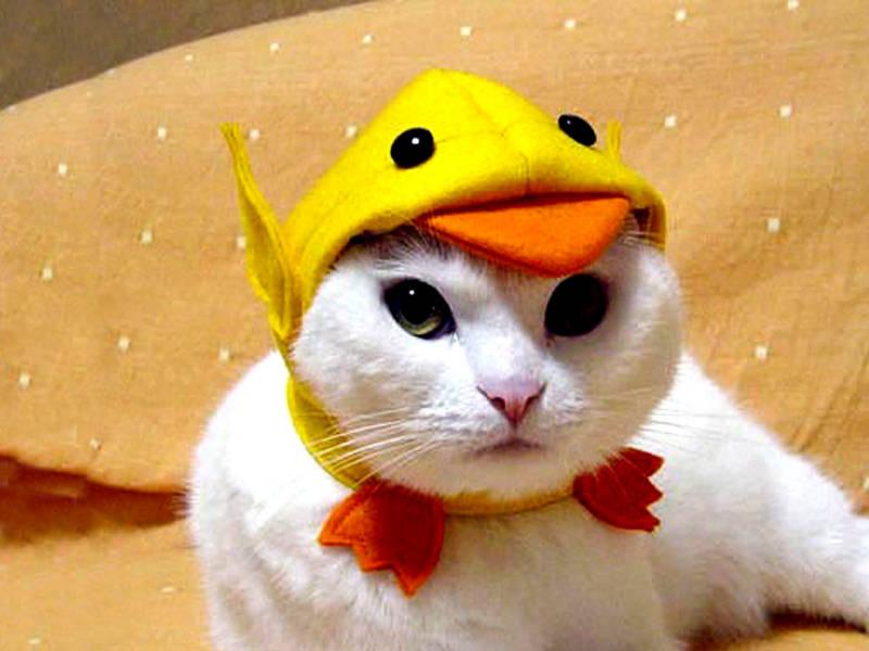 & Cute Cat In Costume Funny Pet