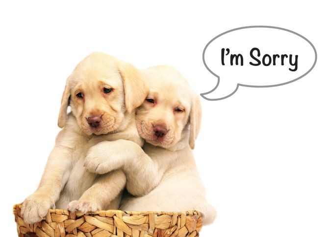 Cute Puppies Says I'm Sorry Picture