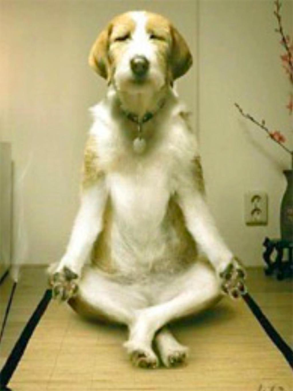 Dog Doing Yoga Funny Pet