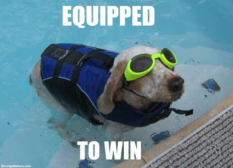 Dog Funny Swimming Picture dog funny swimming picture