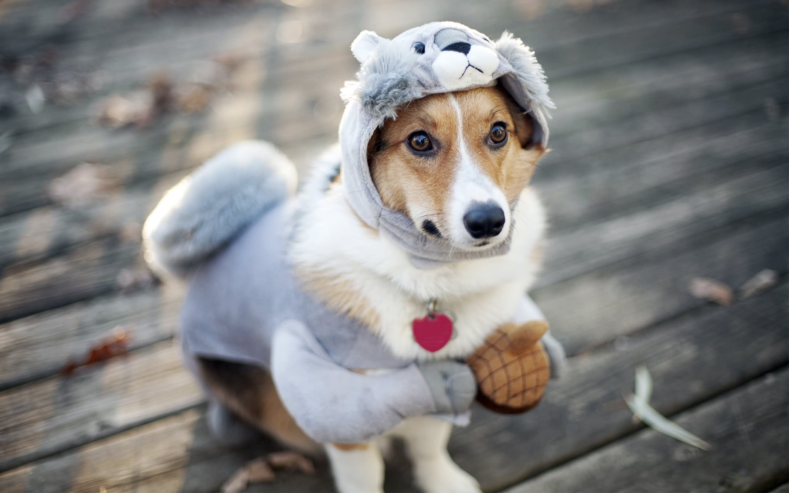 Dog In Funny Costume Pet