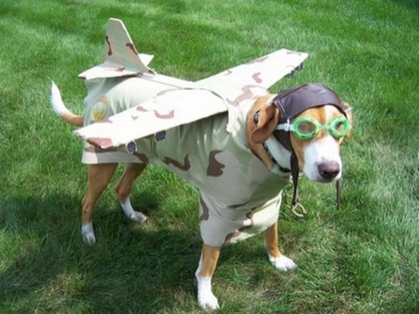 Dog In Plane Costume Funny Pet