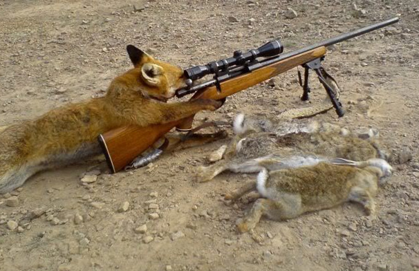 Dog-Shooting-Funny-Hunting-Picture.jpg