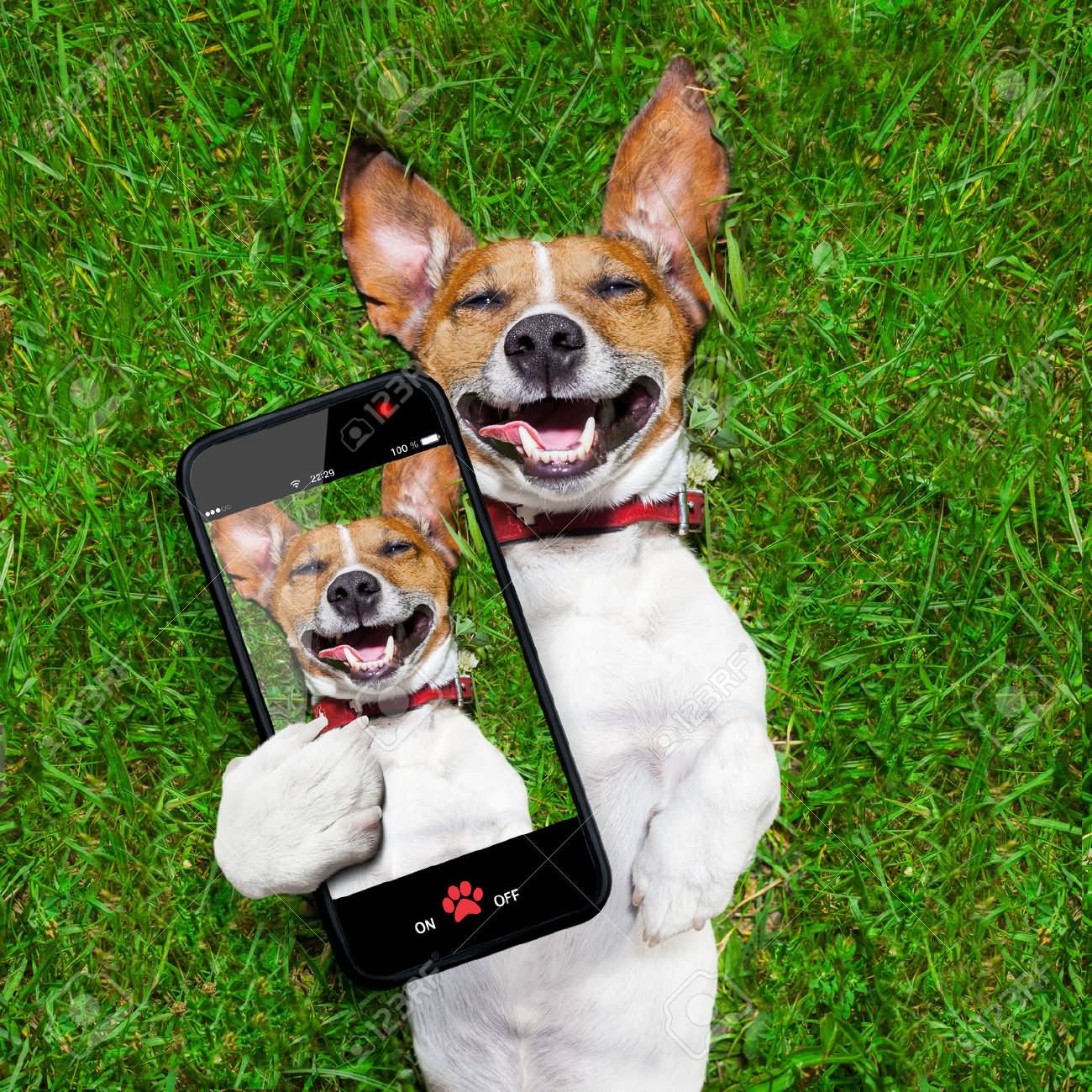 Dog Taking Selfie Funny Laugh Face - photo#27