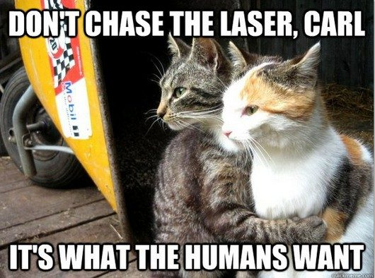 Dont Chase The Laser Carl Funny Cat Meme