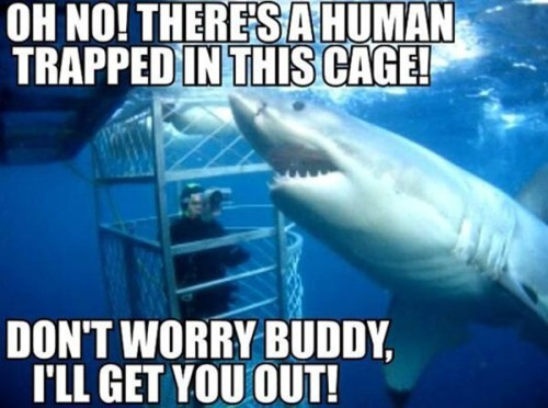 Don't Worry Buddy I Will Get You Out Funny Shark Meme