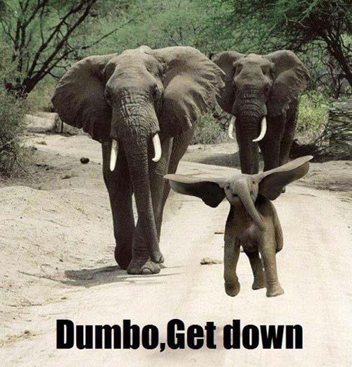 dumbo get down funny elephant meme