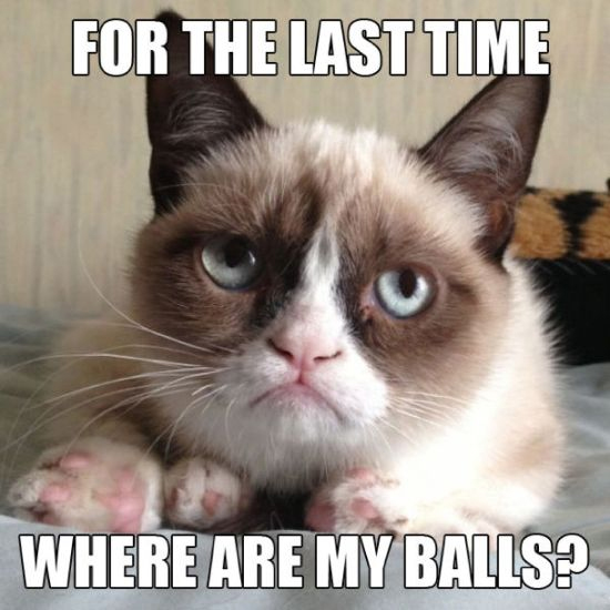 [Image: For-The-Last-Time-Where-Are-My-Balls-Funny-Cat-Meme.jpg]