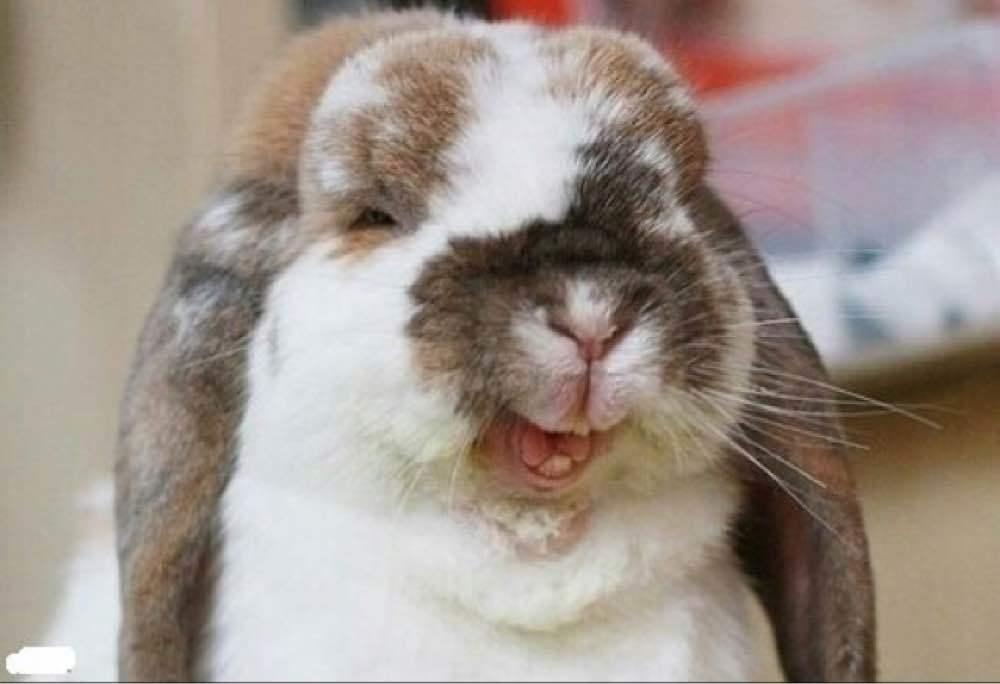 всех картинка зайца с зубами ненавязчивой форме подачи